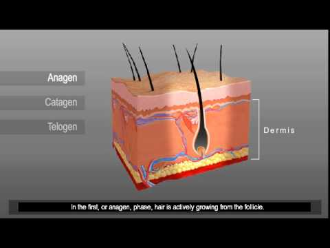 Laser Hair Removal – Understanding Hair Growth Cycles